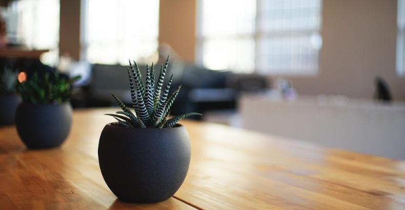 Waarom planten in je huis goed voor je zijn